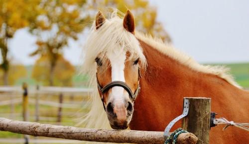 horse-101